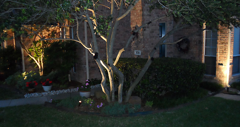 Lighting to Enhance Landscape